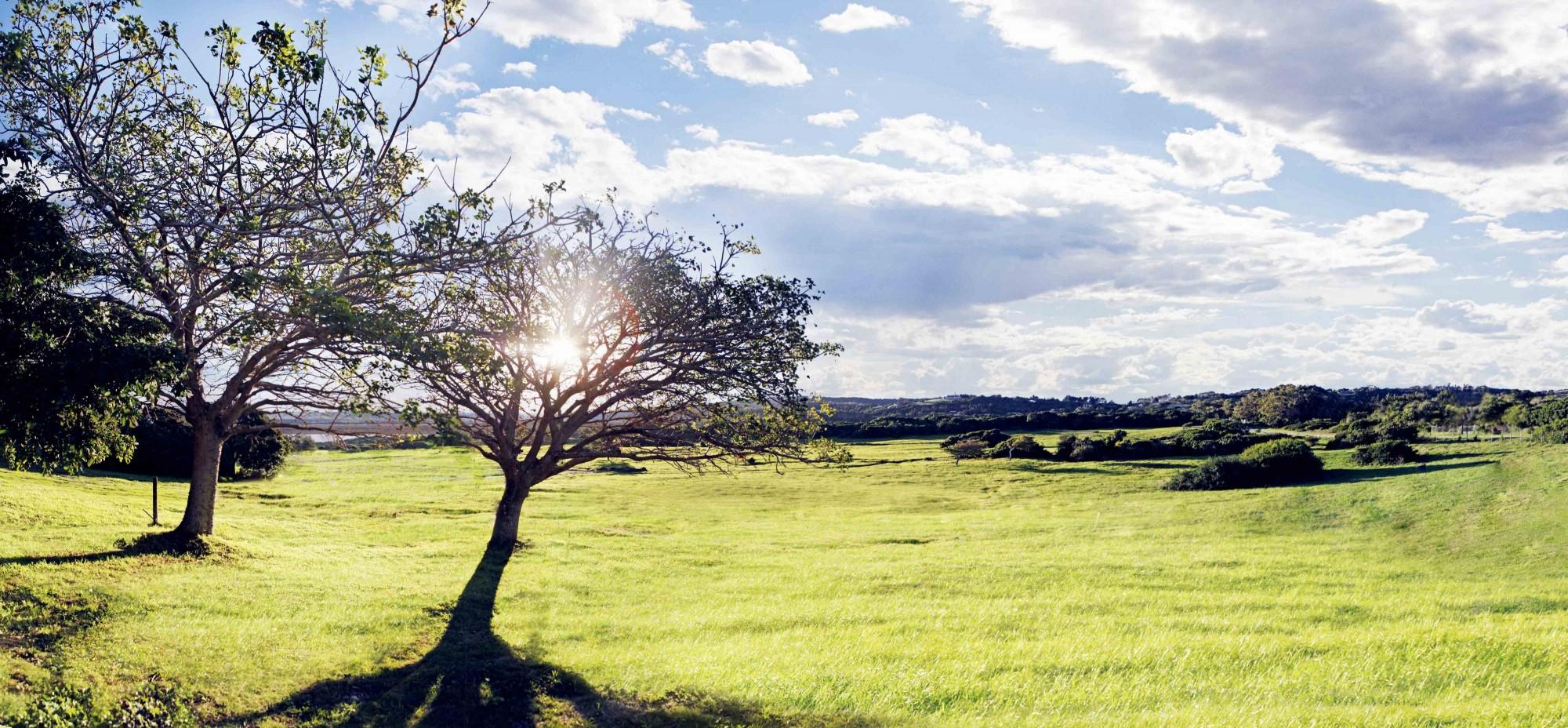 Landscape-7-e1441115346292