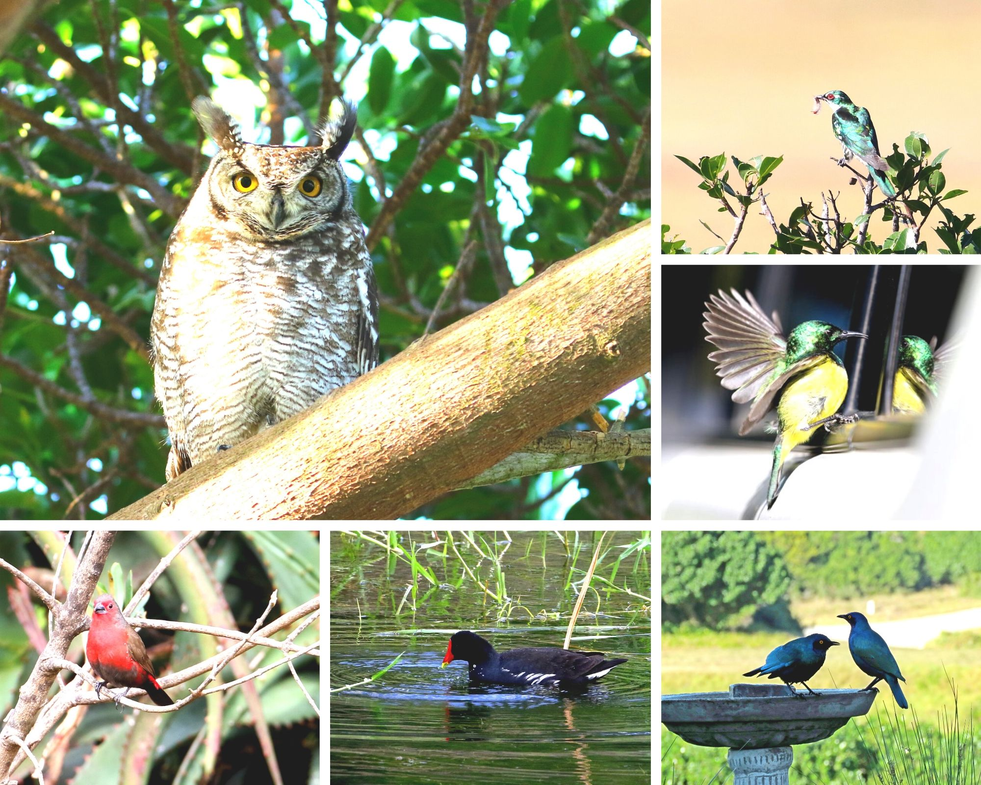 These are just a few of the beautiful birds that can be found at Sardinia Bay estate.